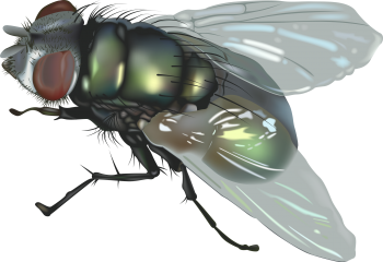 Animated  Fly HD PNG Image HD Wallpapers For Android