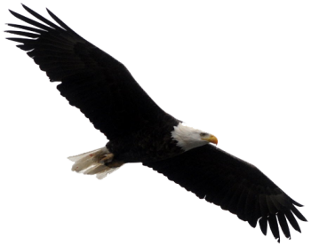 Full HD Bald Eagle Png Clipart