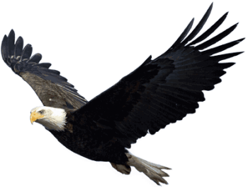 Flying  High Eagle PNG Image  HD Wallpapers Download For Android Mobile