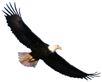 Sky Diving  Eagle PNG Transparent Image HD Wallpapers Download For Android Mobile