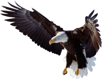 Flying Eagle Clipart PNG Image HD Wallpapers Download For Android Mobile