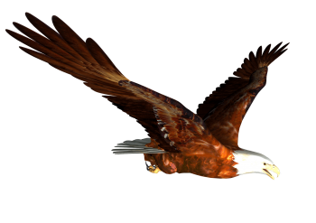 Flying Eagle PNG Image HD Wallpapers Download For Android Mobile