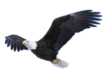 Full HD Flying Eagle Transparent