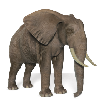 Full HD Elephant PNG Image HD Wallpapers Download For Android Mobile