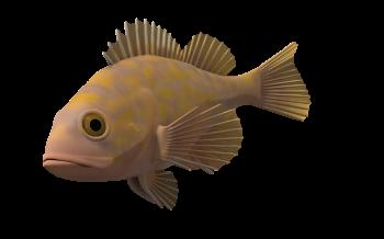 Full HD Ocean Fish Transparent Background