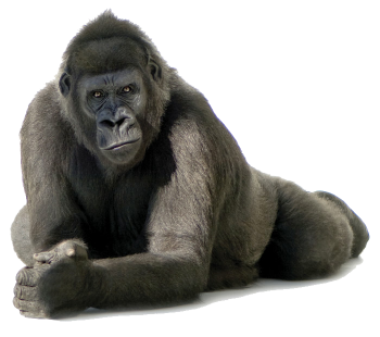 Lean Gorilla  3D PNG Image HD Wallpapers For Android