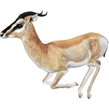 Sitting Gazelle PNG Image HD Wallpapers Download For Android Mobile