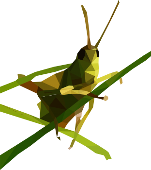 Painting Of Grasshopper PNG image HD Wallpapers Download For Android Mobile