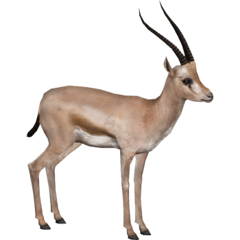 Download Gazelle HD PNG image HD Wallpapers  For Android Mobile