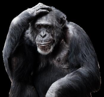 HD Transparent Download Wallpaper Gorilla