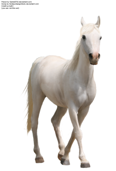 White   Horse PNG HD Wallpapers For Android