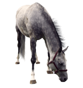 Wild  Horse PNG Image HD Wallpapers Download For Android Mobile