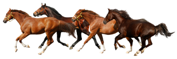 Horse PNG   Transparent HD Wallpapers For Android