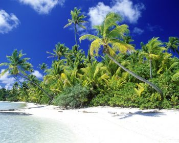 Palm Beach Solomon Islands HD Wallpaper For Free