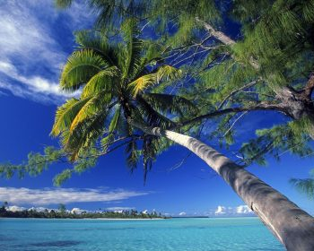 Palm Tree Society Island Beach HD Wallpaper For Free