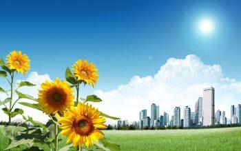 Sunflower City Download Full HD Wallpaper