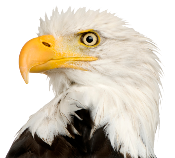 Eagle Head HD PNG Image HD Wallpapers For Android