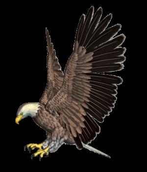 Transparent Eagle Png