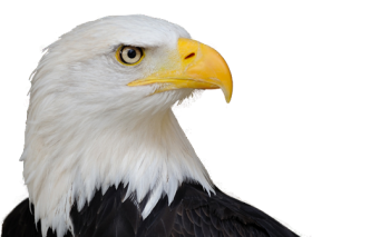 Transparent Eagle PNG Full HD Wallpapers For Android