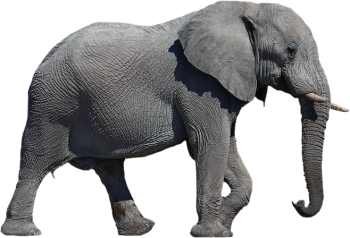 Full HD Elephant Transparent PNG Image HD Wallpapers For Android