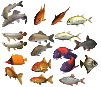 Transparent Full HD School Of Fish Image