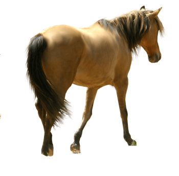 Transparent Horse Siluet PNG Image Download Transparent HD Wallpaper Download For Android Mobile Wallpapers HD For I Phone Six Free Download