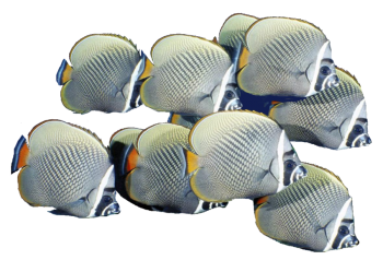 Transparent School Of Fish PNG Image HD Wallpapers For Android