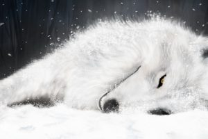 White Fox In Ice