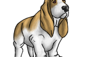 Basset Hound Transparent HD Wallpapers Download For Android Mobile