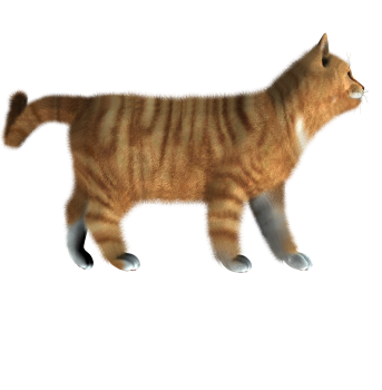 Standing Kitten PNG image HD Wallpaper Download For Android Mobile Wallpapers HD For I Phone Six Free Download