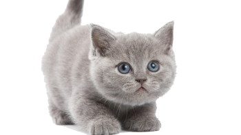 Shock Kitten PNG Image HD Wallpaper Download For Android Mobile Wallpapers HD For I Phone Six Free Download