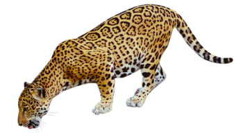 3D Jaguar HD PNG image HD Wallpaper Download For Android Mobile Wallpapers HD For I Phone Six Free Download