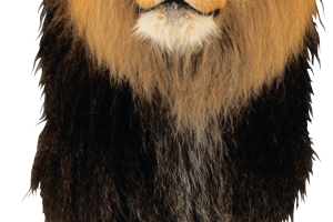 Lion PNG Image   HD Wallpaper Download For Android Mobile   Wallpaper HD For I Phone Six Free