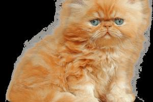 HD Kitten PNG Nice Cute Kitten