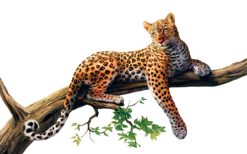 HD Wallpaper Jaguar Png Picture