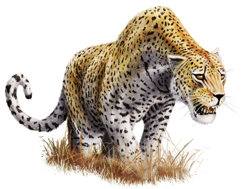 Danger  Leopard Transparent image PNG image HD Wallpaper Download For Android Mobile Wallpapers HD For I Phone Six Free Download