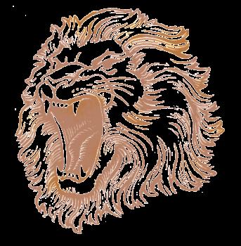 HD Wallpaper Lion Head Image