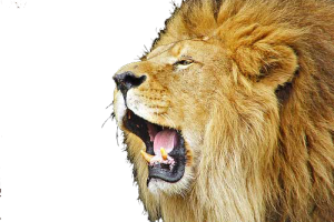 Roaring Lion Image Download For Free