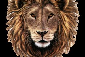 Lion Head Clip Art Transparent PNG Wallpaper