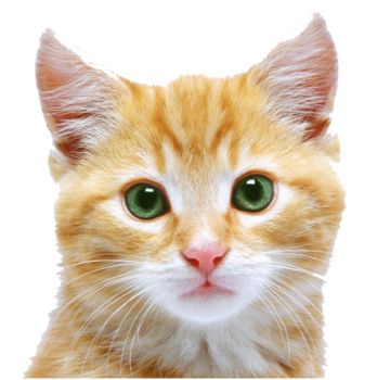 Cute Kitten  Face PNG image HD Wallpaper Download For Android Mobile Wallpapers HD For I Phone Six Free Download