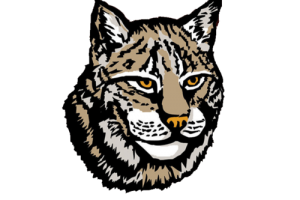 Lynx PNG HD Wallpapers Download For Android Mobile