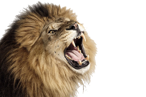 Roaring Lion Photo PNG | 3D HD Wallpaper | HD Wallpaper Download For Android Mobile