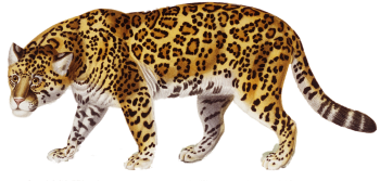Jaguar PNG Wallpaper | Jungle Hunter | 3D HD Wallpaper | HD Wallpaper Download For Android Mobile