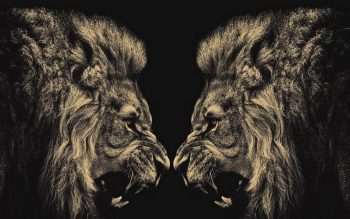 Animals Lions Conflict Neat Image For Free