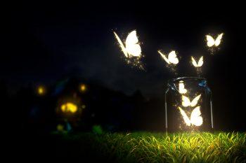 Beautiful Glowing Butterflies Grass Bottle Blur Ground Night Dark Sky Macro Nature