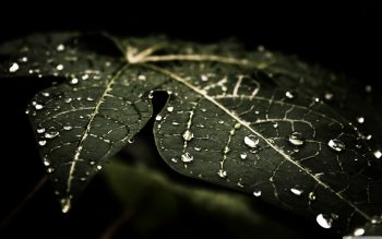 Leafy Droplets Photograph Get Neat Image For Free