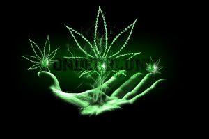 Marijuana Weed 420 Ganja Photograph