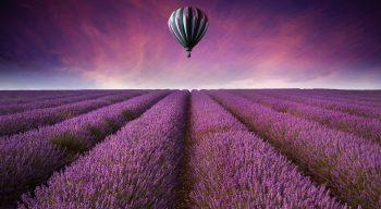 Nature Landscape Field Fields Air Balloon Flowers Purple Sky
