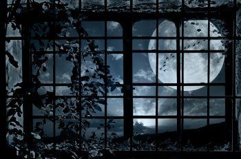Night Window Grille Plant Bindweed Moon Flock Birds Mood Bokeh Get Neat Image For Free