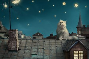 Persian White Cat Kitten Fairytale Fantasy Roof House Sky Night